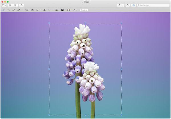 Comment Rogner Ou Recadrer Une Photo Sur Mac